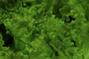 lettuce-329537_1280
