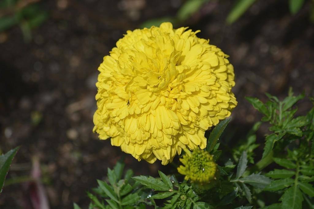 flower-923239_1280